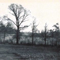 Looking towards 'Highfields' from 49 Carpenders Avenue - Bomb dropped in 2nd field - became site of St Meryl School - 1940's | Arthur Hall