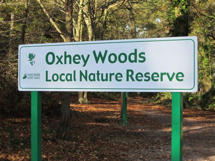 Oxhey Woods   S. Waller