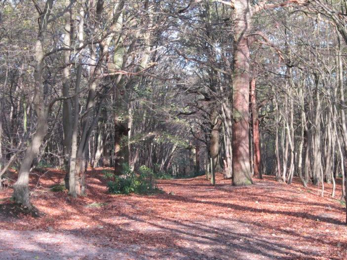 Oxhey Woods