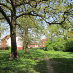 Clarendon School - Chilwell Gardens