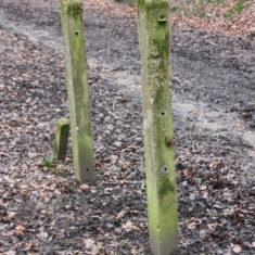 Fenceposts | Neil Hamilton