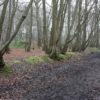 A walk through Paddock Spring