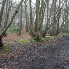 Paddock Spring, Oxhey Wood | Neil Hamilton