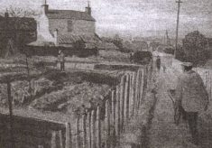 Paddock Road Allotments 1940 - 1946