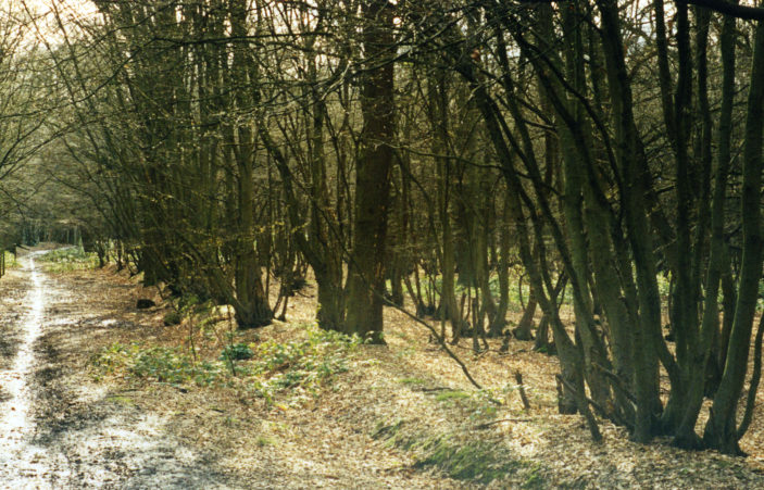 Oxhey wood looking NE up track Acc 3898 | Hertfordshire Archives and Local Studies