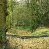 Oxhey Wood