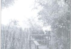 Boyhood Memories of Attenborough Fields in the 1940s