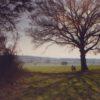 Merry Hill Woodland Trust
