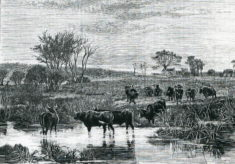 Etching of site of Oxhey Wood School