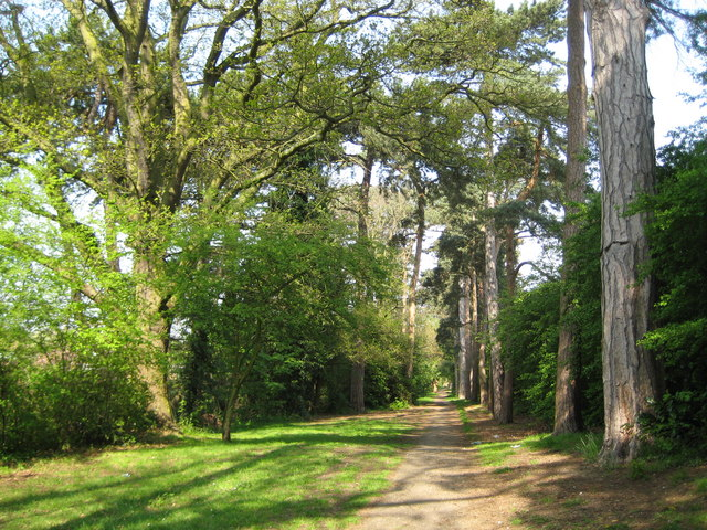 Woodland Walk | Copyright Nigel Cox and licensed for reuse under Creative Commons Licence